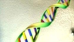 ເຊີນຊົມ ວີດີໂອ ການຄົ້ນຫາ ຂໍ້ມູນ ທາງດ້ານພັນທຸກຳ ຫຼື DNA ແມ່ນມີຄວາມແມ່ນຍຳ ຫຼາຍຂຶ້ນ