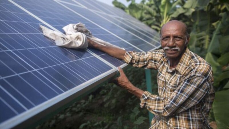 Indian Farmer Paves Way for New, Climate-smart Cash Crop: Sunshine