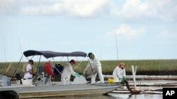 Workers continue cleanup of oil in Barataria Bay near Grand Isle, Louisiana, 19 Jun 2010