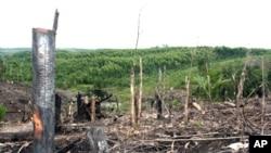 Pembabatan hutan di Semenanjung Kampar, Riau.