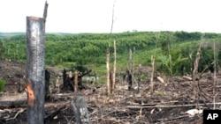 Penebangan hutan di Kampar Peninsula, provinsi Riau (foto: ilustrasi). Aktivis lingkungan mengatakan masih banyak illegal logging yang harus diatasi oleh pemerintah Indonesia.