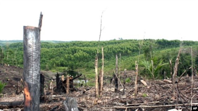 Deforestation, forest dependent community on the Kampar Peninsula in Riau Province, Sumatra, Indonesia.