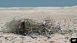 非洲干旱严重