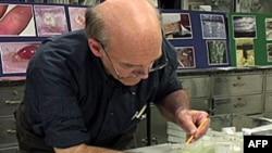 Ông Lou Sorkin, một chuyên viên về sâu bọ cho các con rệp cắn lên tay ông để nghiên cứu