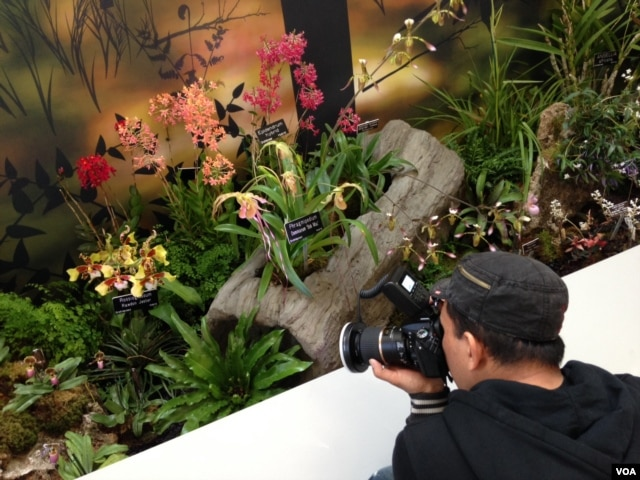 A visitor takes a photo of some of the thousands of orchids being featured at a new exhibit at the U.S. Botanic Garden in Washington, March 8, 2016. (J. Taboh/VOA)