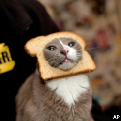 "This cat can't be happy about this ""breaded"" photo op in which it found itself."