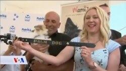 Pas iz filma Dogman dobio nagradu za najbolju ulogu