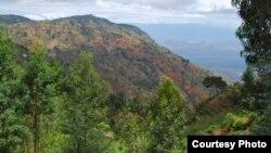 L'usage intensif du bois de chauffe pour la cuisson des aliments entraine également la déforestation