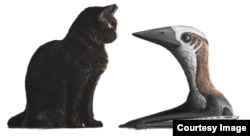 Small-bodied pterosaur compared to domestic cat. (Mark Witton, University of Southampton)