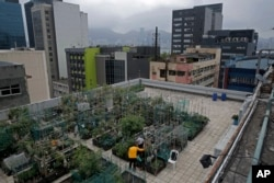 FILE - Farmers work at a rooftop vegetable garden of an industrial building in Hong Kong, March 18, 2018.