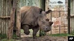 멸종 위기에 처한 아프리카 코뿔소. (자료사진)