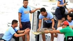 Bức ảnh chụp vào ngày 10/5/14 cho thấy các cảnh sát biển của Philippines đem các con rùa biển từ tàu đánh cá của ngư dân Trung Quốc ra