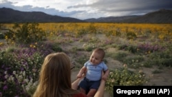 In this Wednesday, March 6, 2019, photo, Rene Garcia holds her three-month-old son Brandon amid wildflowers in bloom near Borrego Springs, Calif.