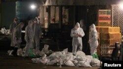 Nhân viên y tế tiêu hủy gia cầm tại Thượng Hải, ngày 5/4/2013.