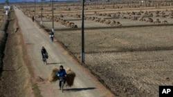朝鲜农民骑车经过农田(资料图)