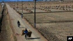 Nông dân Bắc Triều Tiên đạp xe ngang qua một cánh đồng gần thị trấn Sariwon, Bắc Triều Tiên. (Ảnh tư liệu)