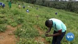 App Helps African Farmers Detect Crop Disease