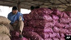 在一个批发市场,一位印度工人坐在一袋袋的洋葱上