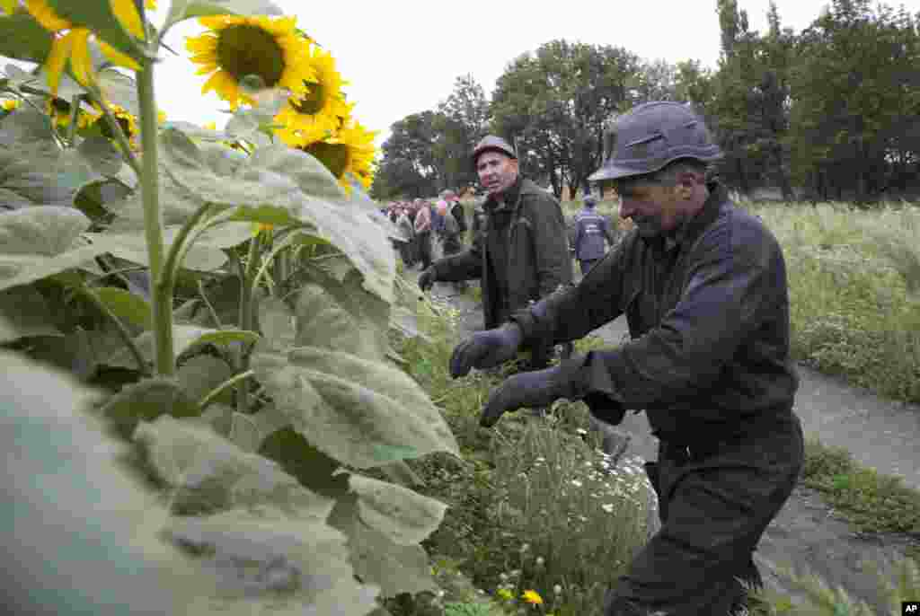 Ukrainian coal miners search the site of a crashed Malaysia Airlines passenger plane near the village of Rozsypne, eastern Ukraine Friday, July 18, 2014.