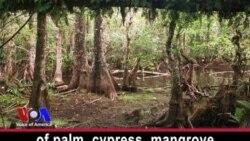River of Grass: the Everglades