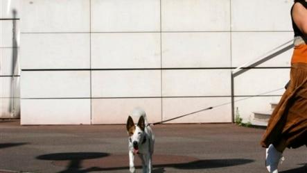 一位女士在阿尔斯通公司的巴黎总部外遛狗(资料照)