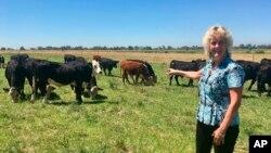 გენეტიკოსი ალისონ ენენამი კლონირების შედეგად გამოყვანილ ურქო ძროხებთან