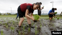 Tourists from Tokyo's universities plant rice seedlings in a paddy field, near Tokyo Electric Power Co's tsunami-crippled Fukushima Daiichi nuclear power plant, during a rice planting event in Namie town, Fukushima prefecture, Japan, May 19, 2018.