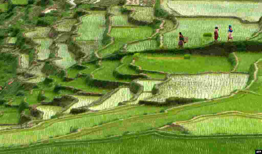 Nepalese farmers walk past rice paddy fields in Changu Naryan village on the outskirts of Kathmandu. Nepal's rice planting season began with the arrival of the monsoon.