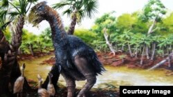 A new study involving CU-Boulder and the Chinese Academy of Sciences has confirmed that a flightless bird weighing several hundred pounds roamed Ellesmere Island in the high Arctic about 50 million years ago.