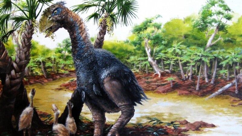 Giant, Flightless Bird Once Roamed Arctic