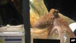 Октоподот Пол умре