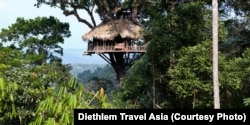 A treehouse that is part of the rainforest gibbon experience at Nam Kan National Park.