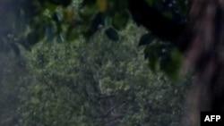 Барак Обама играет в гольф на поле в городке Канеоха на Гаваяйх.
