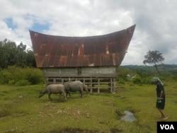 Salah satu rumah warga kecamatan Nainggolan, Pulau Samosir, Danau Toba, Sumatera Utara. (Foto: VOA/Residential houses in Nainggolan District, Samosir Island, Lake Toba, North Sumatra. (Photo: VOA / Anugerah Adriansyah)
