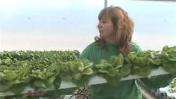 Hydroponic Farmer Produces Year-Round Harvest