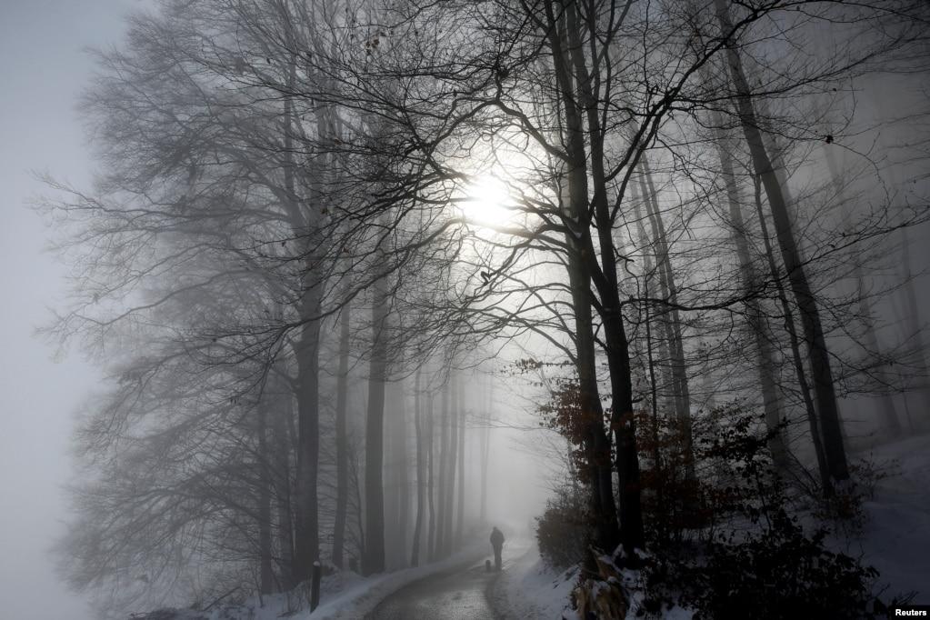 스위스 베른의 안개 낀 아침에 한 남성이 반려견과 함께 숲길을 걷고 있다.