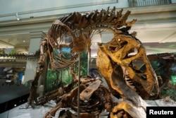 واشنگٹن کے سمھ سونیئن میوزیم میں رکھا گئے ایک ڈئنوسار کا ڈھانچہ