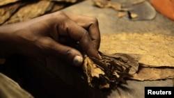 Pembuatan cerutu di pabrik cerutu Cohiba 'El Laguito' di Havana. (Foto: Dok)