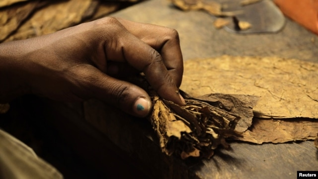 A woman rolls a cigar at the Cohiba cigar factory 'El Laguito' in Havana, September 10, 2012.