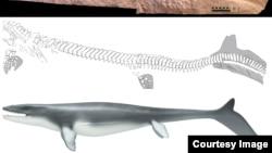 Thằn lằn biển khổng lồ dài tới 17 mét với hình dạng thon giống như cá, có vây giống như cá mập và đuôi giống như cá voi.