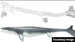 The mosasaur Prognathodon was a lizard-like creature with a shark-like fin.