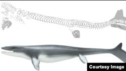 The mosasaur Prognathodon was a lizard-like creature with a shark-like fin.