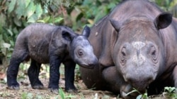 Fighting Rhino Poaching