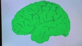 Zbulime të reja rreth kujtesës