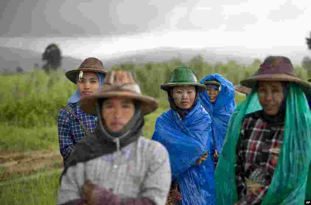 Petani Myanmar yang berjilbab menutupi badan mereka dengan plastik saat hujan melanda Naypyidaw.