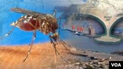 Gwadar-Chikungunya