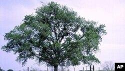 Tipičan prizor krajolika u srcu Teksasa, s obiljem plavog vučjaka i drugih vrsta poljskog cvijeća