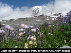 Wildflowers surround Mount Rainier