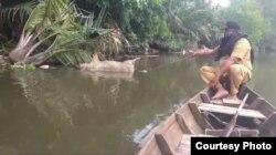 Bangkai babi yang dibuang masyarakat di Sungai Bederah, Kecamatan Medan Marelan, Kota Medan. Selasa (5/11). (Courtesy: Camat Medan Marelan)