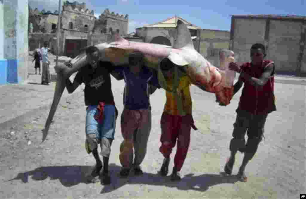 Somali fishermen carry a hammerhead shark to market on their shoulders in Mogadishu, Somalia Friday, Nov. 4, 2011. (AP Photo/Farah Abdi Warsameh)